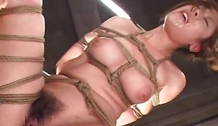 Oriental babe roped up getting toy fucked marvelously